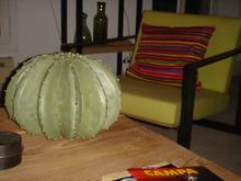 Cactus3nn